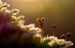 Bevroren mos royalty-vrije stock afbeeldingen