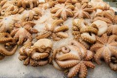 Bevroren octopus Royalty-vrije Stock Foto