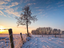 Bevroren omheining stock afbeeldingen