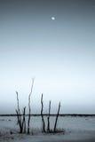 Bevroren open gebied met volle maan Stock Foto