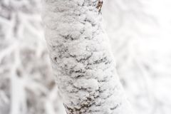 Bevroren over boomtak Stock Fotografie