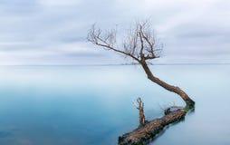 Bevroren overzees met één eenzame boom - stille kalmte Stock Foto