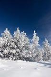 Bevroren pijnbomen Royalty-vrije Stock Fotografie