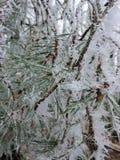 Bevroren pijnboomnaalden met uiterst kleine ijskristallen in de aard Genomen in Karlsruhe stock foto