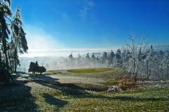 Bevroren Regen Stock Foto