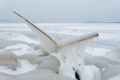 Bevroren riet op de kust stock afbeelding