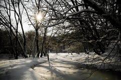 Bevroren rivier in een de winterbos Royalty-vrije Stock Fotografie