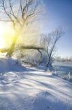 Bevroren rivier en bomen royalty-vrije stock fotografie