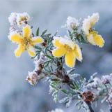Bevroren schoonheid Stock Afbeelding