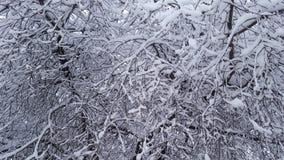 Bevroren sneeuw op bos Royalty-vrije Stock Foto's
