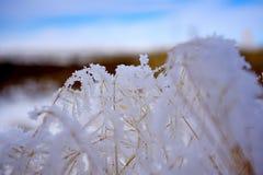 Bevroren sneeuwvlokken royalty-vrije stock afbeelding