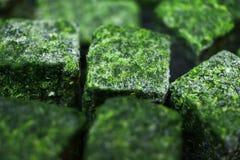 Bevroren spinazie Stock Afbeelding