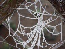Bevroren Spinneweb Stock Foto's