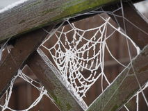 Bevroren Spinneweb Royalty-vrije Stock Afbeelding