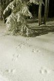 BEVROREN: sporen in sneeuw Royalty-vrije Stock Fotografie