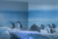 Bevroren streek van aquarium, ijzig landschap, waar u pengu kunt bekijken Stock Afbeelding