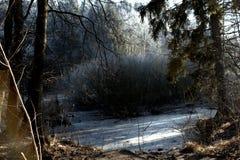 Bevroren struik in de winter stock foto