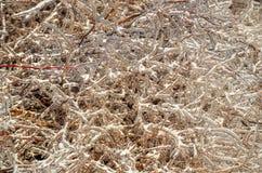 Bevroren struiken Stock Fotografie