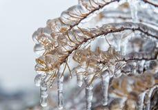 Bevroren tak met ijskegels Stock Afbeeldingen