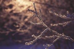 Bevroren tak op zonsondergang, de winter en sneeuwachtergrond stock foto