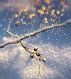Bevroren takje kleurrijke sneeuwval, wintertijdconcept stock fotografie