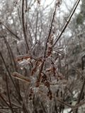 Bevroren takken stock foto