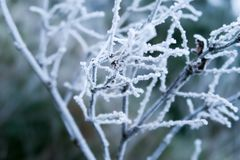 Bevroren takken tijdens de Winter stock fotografie