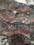 Bevroren tilapia vissen royalty-vrije stock foto's