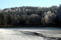 Bevroren vijver tussen bomen stock foto