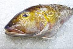 BEVROREN vissen stock foto