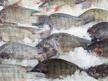 Bevroren vissen op de achtergrond van de ijstextuur Royalty-vrije Stock Foto