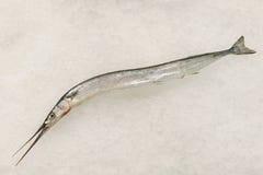 Bevroren vissen op ijs Stock Afbeelding