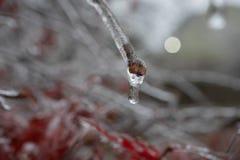 Bevroren Waterdruppeltje op Verglaasde Stam stock foto