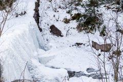 Bevroren waterval van bergstroom in het midden van sneeuw en ro Royalty-vrije Stock Fotografie