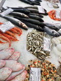 Bevroren zeevruchten en vissen op ijs Royalty-vrije Stock Afbeelding