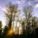 Bevroren zon Stock Foto