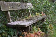Bevuxen bänk i skogsbevuxet område i hösten royaltyfri fotografi