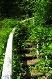 Bevuxen trappa Fotografering för Bildbyråer