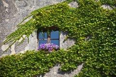 Bevuxen vägg av fasaden för bostads- byggnad Arkivfoton