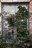 Bevuxet grönskafönster Royaltyfri Foto