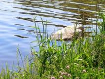 Bevuxet med grässjön Arkivbilder