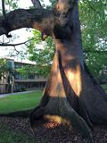 Bevuxet träd som är tropiskt med arkivbild