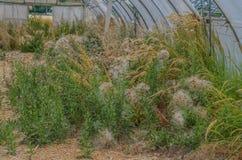 bevuxet växthus Arkivbild