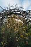 Bevuxna växter i trädgård fotografering för bildbyråer