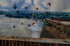 Bevy of birds and young resting on the fortress walls Royalty Free Stock Image