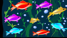 Bevy of neon fish floating in aquarium. Animated illustration stock footage