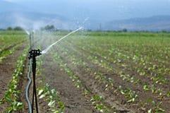Bewässerung stockfotos