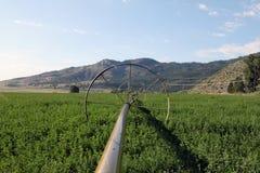 Bewässerung auf einer hohen Wüstenranch Lizenzfreies Stockbild
