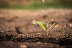 Bewässerung den Boden unfruchtbar stockfoto
