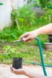 Bewässerung der Bäume, die durch Gummischlauch pumpen Stockbild